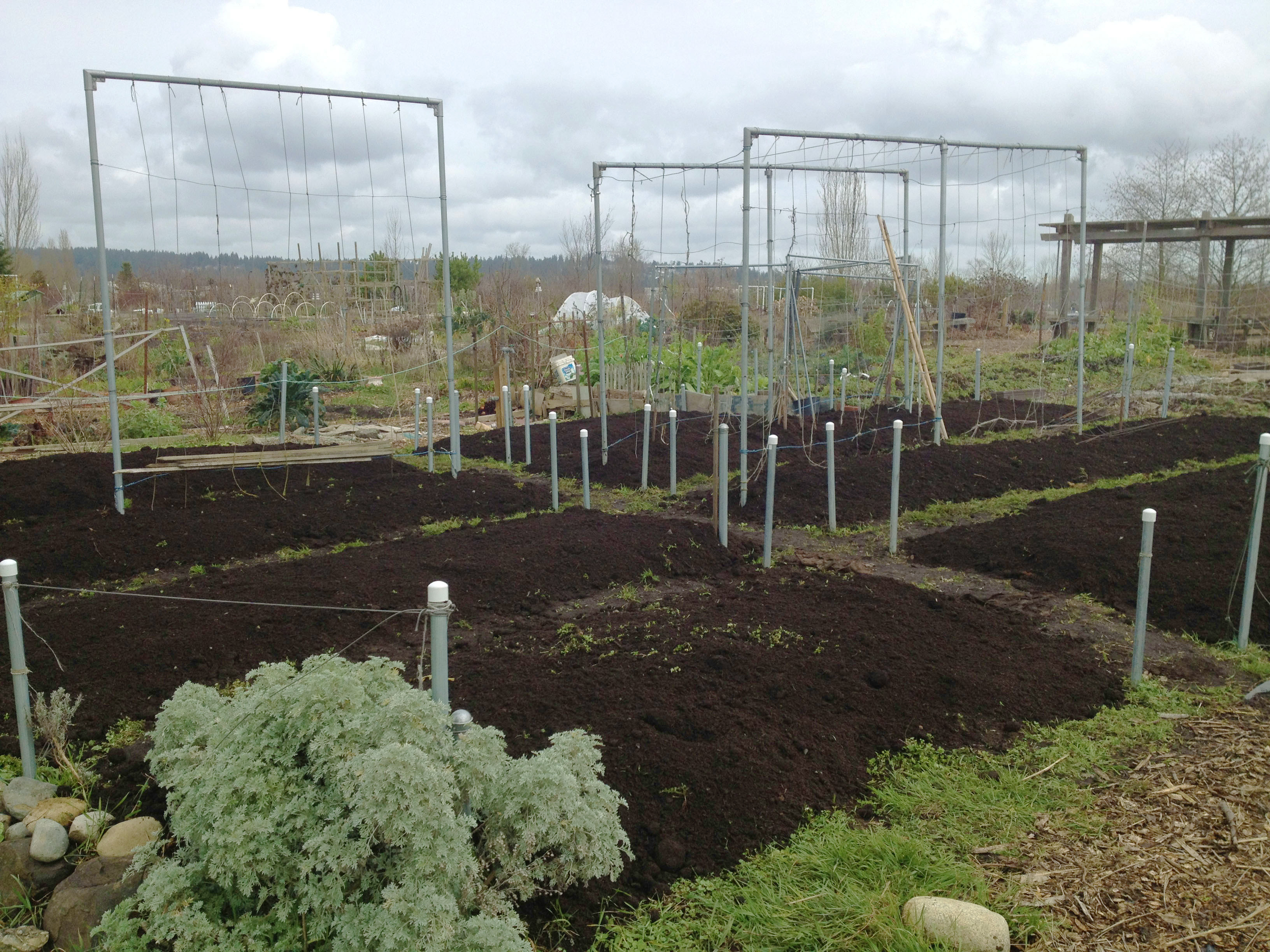 P-Patch Vegetable Gardening: Our Family's Experience on