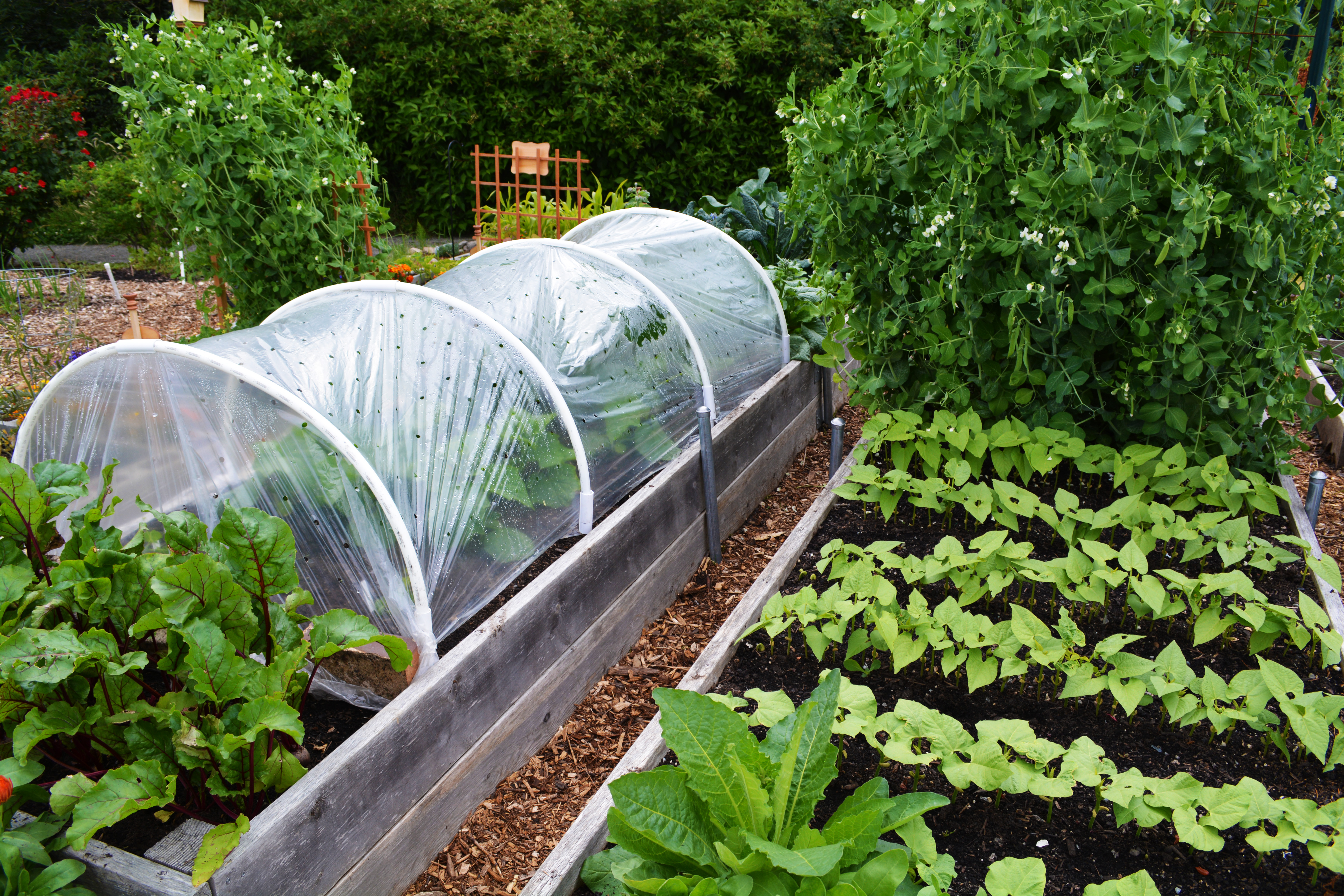 P Patch Vegetable Gardening Our Family 39 S Experience