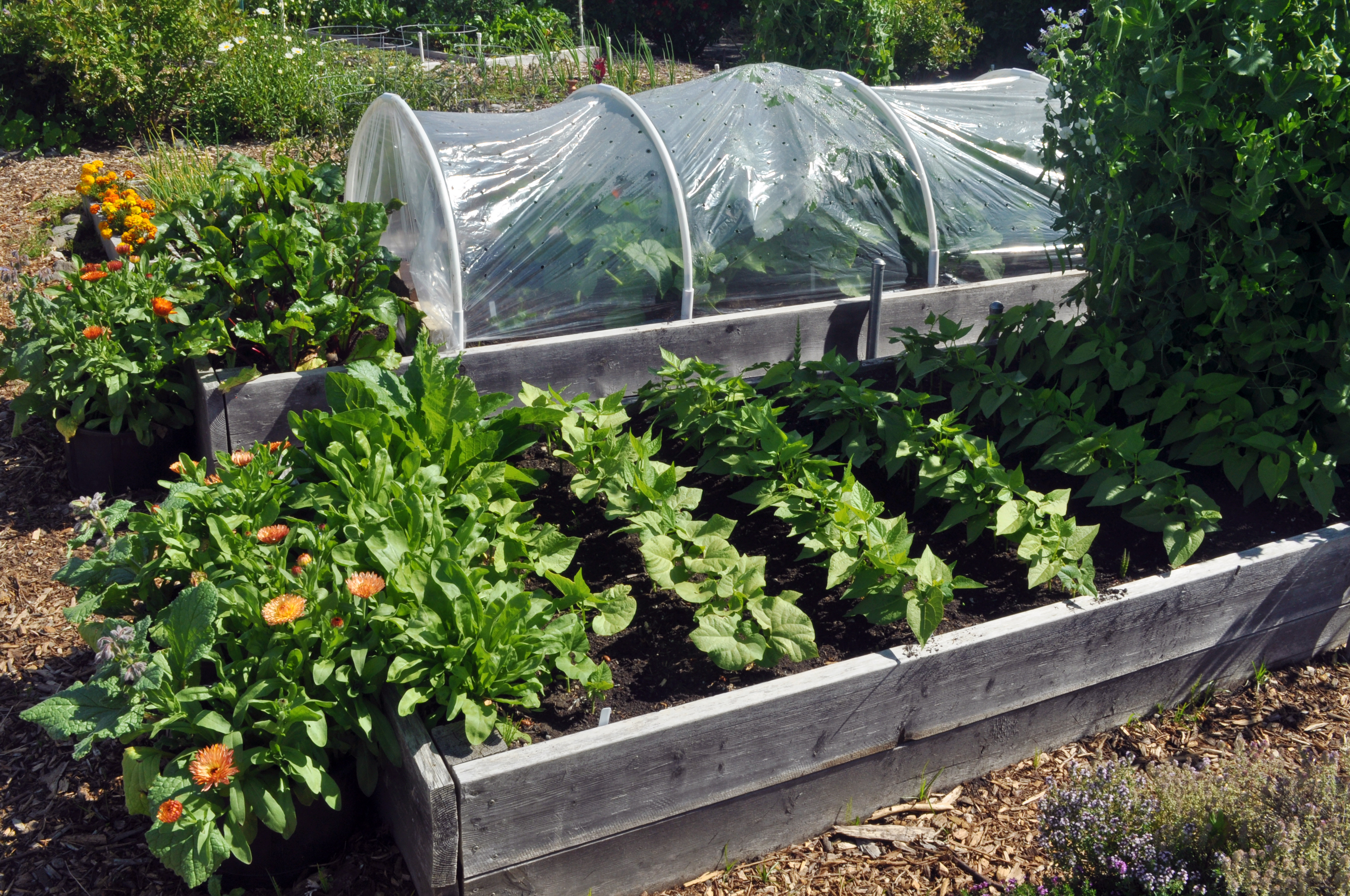 P Patch Vegetable Gardening Our Family S Experience